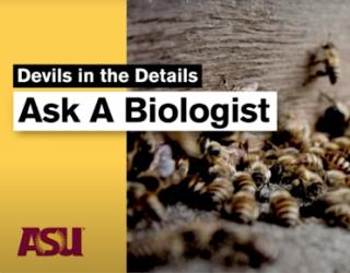 ASU's Ask A Biologist educational platform