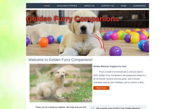 Golden Furry companion